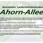 ahorn-allee