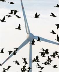 Für die Verpachtung von Flächen für Windkraftanlagen können Eigentümer bisweilen hohe Einnahmen erzielen. Foto Wagner/dpa